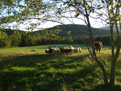 2014_Sheep-Llama-grazing-fall-pastures_Riverbank-Farm