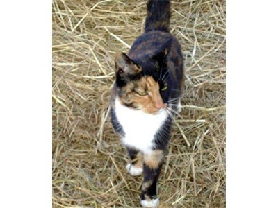 2014_Shelly_barn_cat_Riverbank-Farm